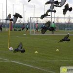 2019 01.29 Training Lehmann – 37