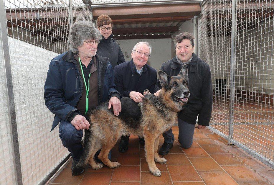 Csm Hoc Tierheim Hunde Obdachloser 290119 07 2Bd3648A76