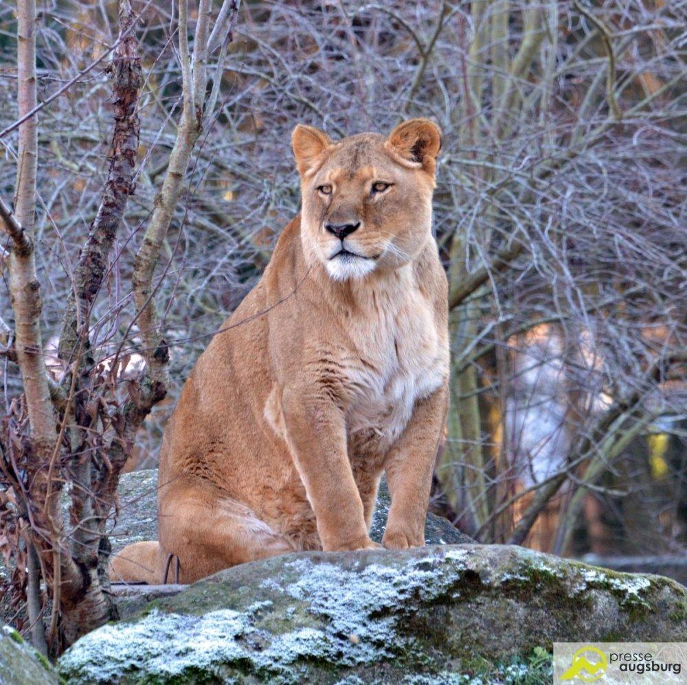DSC_1647 Tierisch verrückt   Zoo Augsburg lässt auch in dieser Adventszeit die Besucher den Eintrittspreis bestimmen Augsburg Stadt News Newsletter Zoo Augsburg Augsburg Tierpark Zahl doch was du willst Zoo Augsburg  Presse Augsburg