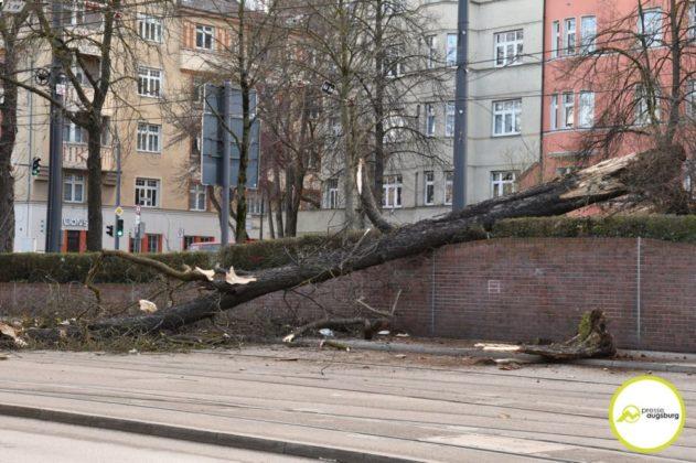2019 03 10 Baum Am Kö – 04