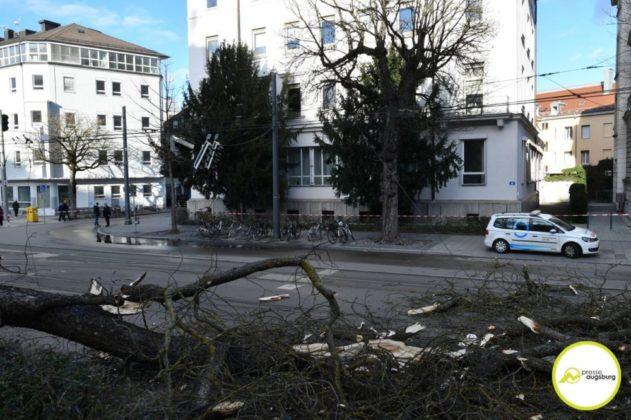 2019 03 10 Baum Am Kö – 14