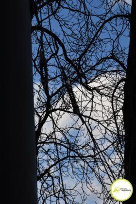 2019 03 10 Baum Am Kö – 16