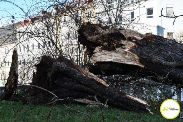 2019 03 10 Baum Am Kö – 19