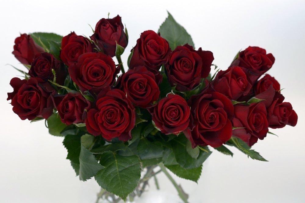 Roses 1473687 1280