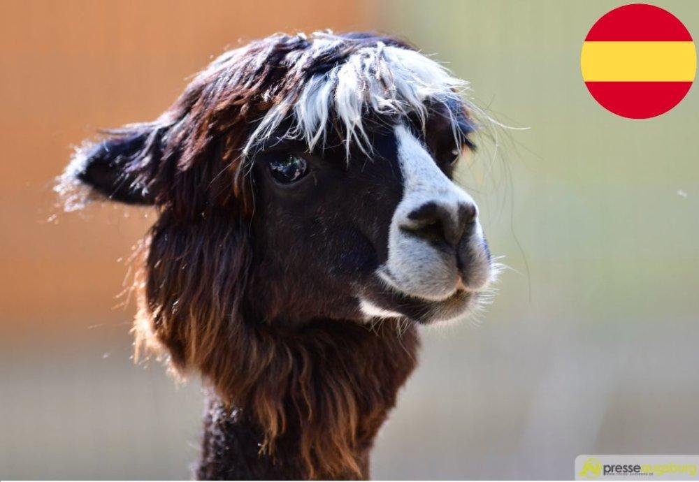zoo-führung-spanisch Spanische Führung im Zoo Augsburg Zoo Augsburg |Presse Augsburg