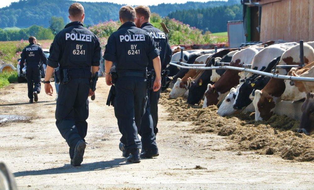 190814_Durchsuchung_waldegg1-2 Tierquäler-Skandal im Allgäu weitet sich aus - Polizei durchsucht weiteren Betrieb in Bad Grönenbach News Newsletter Oberallgäu Polizei & Co Bad Grönenbach Durchsuchung Kühe Landwirtschaft Polizei Rinder Tierquälerei  Presse Augsburg
