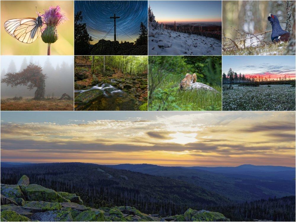 19 09 11 1 Kollage Fotoausstellung Bayerischer Wald