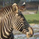 003-600x0-1-150x150 Zoo Augsburg aktuell | Auch im Rekordjahr gibt es immer viel zu entdecken Augsburg Stadt Bildergalerien Freizeit News Newsletter Zoo Augsburg Zoo Augsburg Zoo Augsburg aktuell |Presse Augsburg