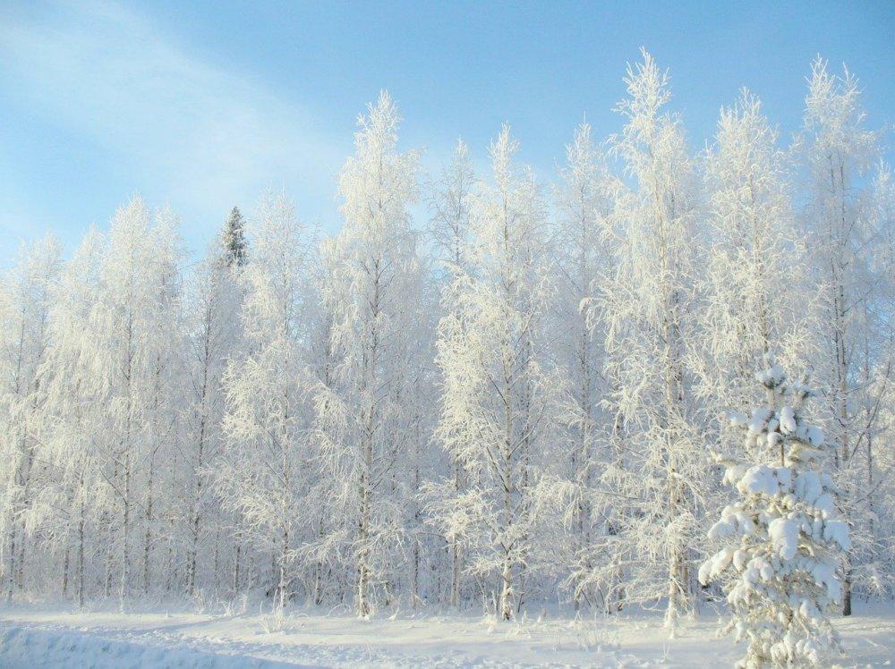 Winter 2683845 1280
