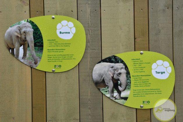2020-02-03-Elefantenhaus-72-von-76.jpeg--629x420 Ein schönes Zuhause für Burma und Targa - Zoo Augsburg feiert die Eröffnung des neuen Elefantenhauses Augsburg Stadt Bildergalerien Freizeit News Newsletter Zoo Augsburg Elefanten Elefantenhaus Eröffnung Zoo Augsburg |Presse Augsburg