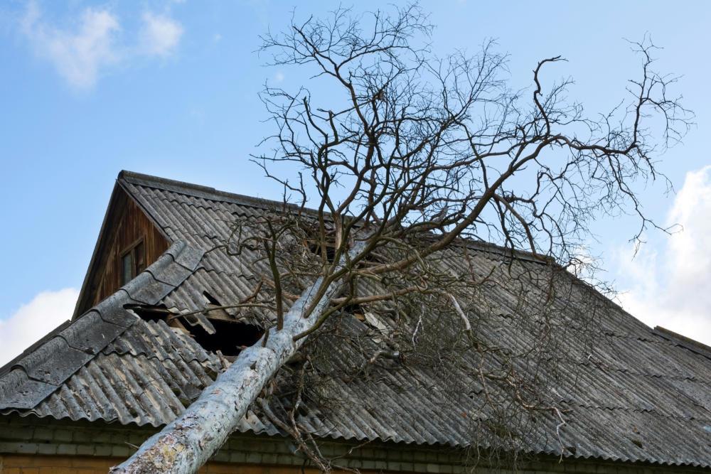 20200210_PM_WetterOnSturmschäden_02 Wer zahlt bei Sturmschäden? Diese Versicherungen sind zuständig Newsletter Überregionale Schlagzeilen Vermischtes |Presse Augsburg