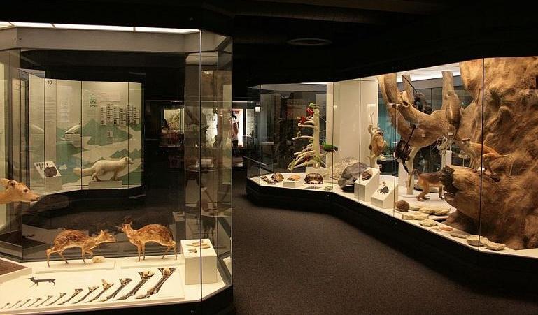 Naturmuseum_Augsburg Naturmuseum Augsburg erhält weiter finanzielle Unterstützung vom Bezirk Schwaben Augsburg Stadt News Region  Presse Augsburg