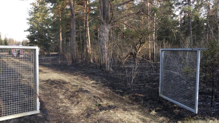 0BFF5F9E-DFA3-4AA2-AB12-CDDDCE64321C-746x420 Ausgedehnter Waldbrand im Siebentischwald hält Feuerwehren in Atem Augsburg Stadt Bildergalerien News Newsletter Polizei & Co Region |Presse Augsburg