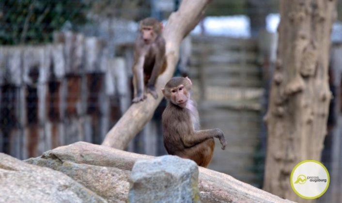 20200314_zoo-116-706x420 Bildergalerie | Frühling im Zoo Augsburg Augsburg Stadt Bildergalerien Freizeit News Newsletter Zoo Augsburg Zoo Augsburg |Presse Augsburg