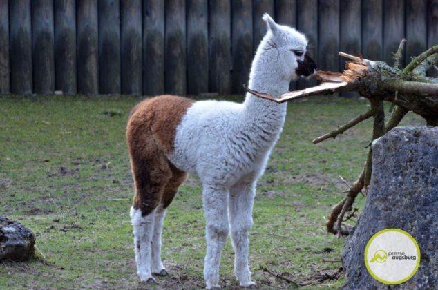 20200314_zoo-42-634x420 Bildergalerie | Frühling im Zoo Augsburg Augsburg Stadt Bildergalerien Freizeit News Newsletter Zoo Augsburg Zoo Augsburg |Presse Augsburg