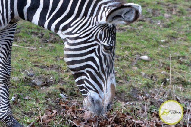20200314_zoo-55-634x420 Bildergalerie | Frühling im Zoo Augsburg Augsburg Stadt Bildergalerien Freizeit News Newsletter Zoo Augsburg Zoo Augsburg |Presse Augsburg