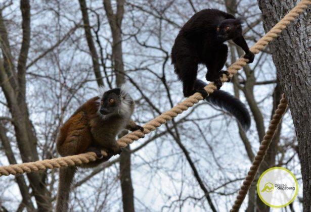 20200314_zoo-73-615x420 Bildergalerie | Frühling im Zoo Augsburg Augsburg Stadt Bildergalerien Freizeit News Newsletter Zoo Augsburg Zoo Augsburg |Presse Augsburg