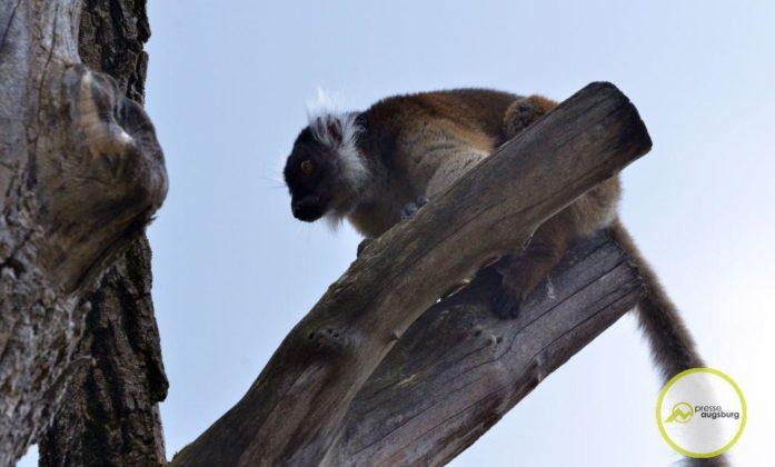 20200314_zoo-75-697x420 Bildergalerie | Frühling im Zoo Augsburg Augsburg Stadt Bildergalerien Freizeit News Newsletter Zoo Augsburg Zoo Augsburg |Presse Augsburg