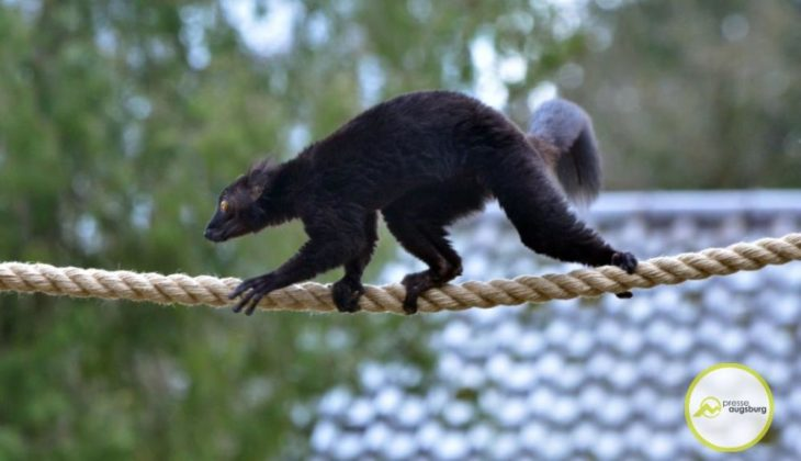 20200314_zoo-79-730x420 Bildergalerie | Frühling im Zoo Augsburg Augsburg Stadt Bildergalerien Freizeit News Newsletter Zoo Augsburg Zoo Augsburg |Presse Augsburg