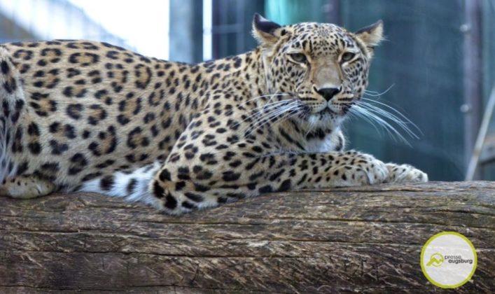 20200314_zoo-9-707x420 Bildergalerie | Frühling im Zoo Augsburg Augsburg Stadt Bildergalerien Freizeit News Newsletter Zoo Augsburg Zoo Augsburg |Presse Augsburg