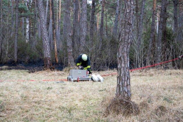Feuer Wald 003