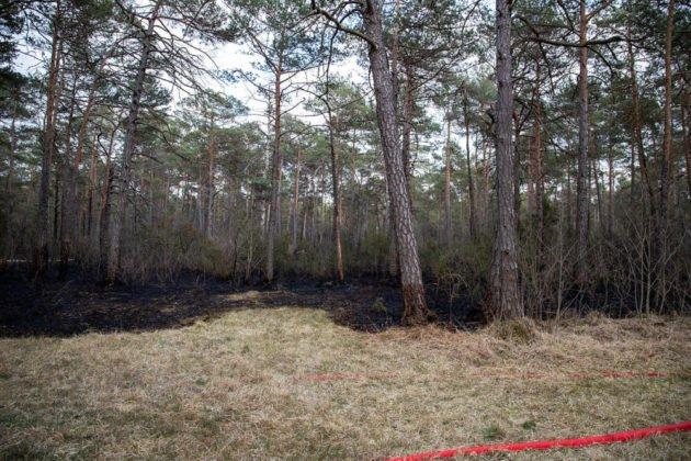 Feuer Wald 007
