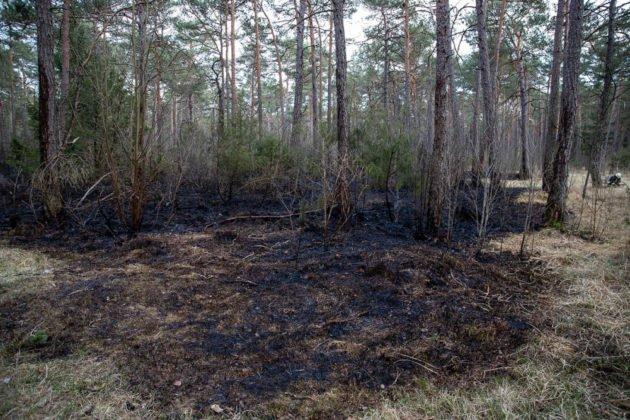 Feuer Wald 008