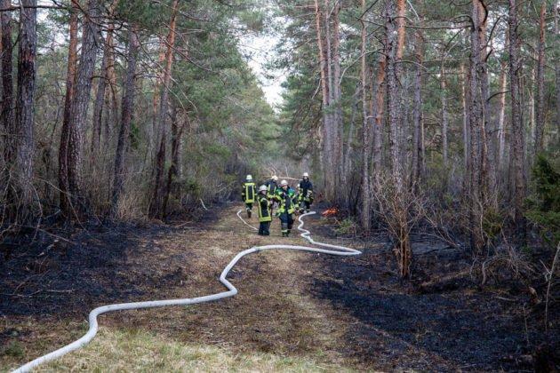Feuer Wald 010