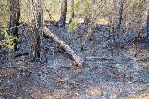 Feuer Wald 012
