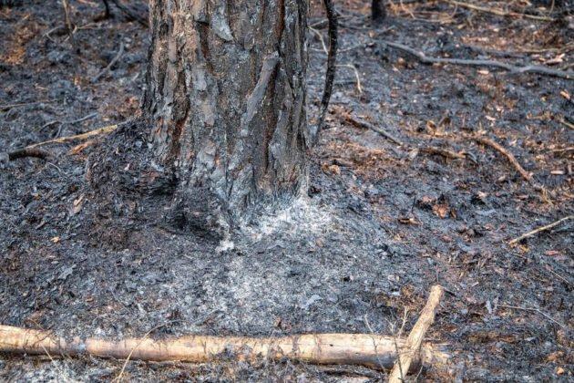 Feuer Wald 013