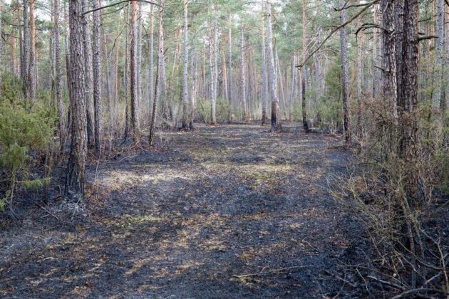 Feuer Wald 014