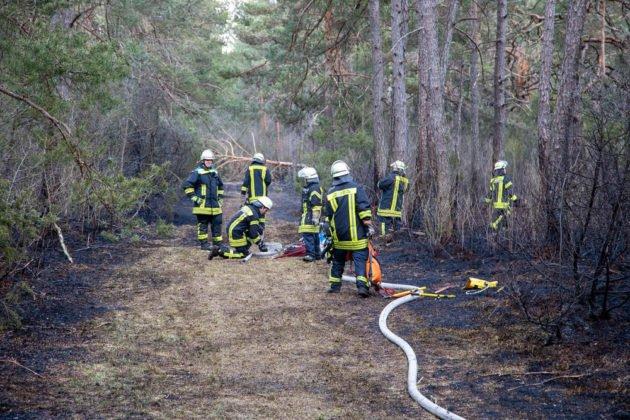 Feuer Wald 015