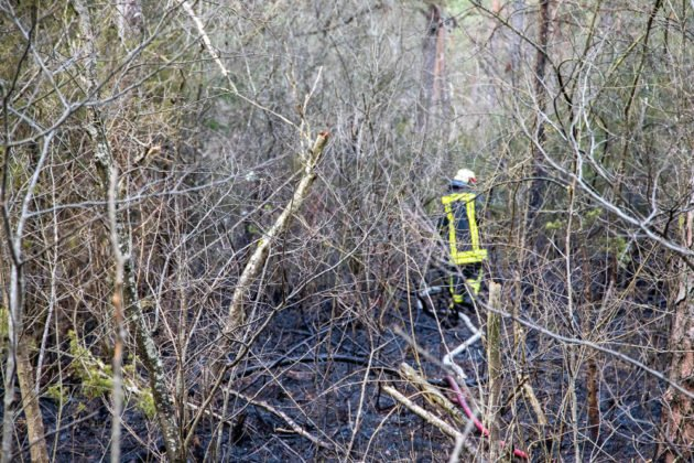 Feuer Wald 016