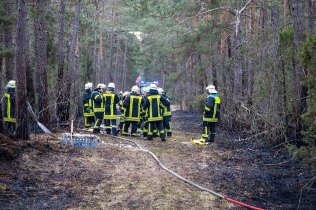 Feuer Wald 017