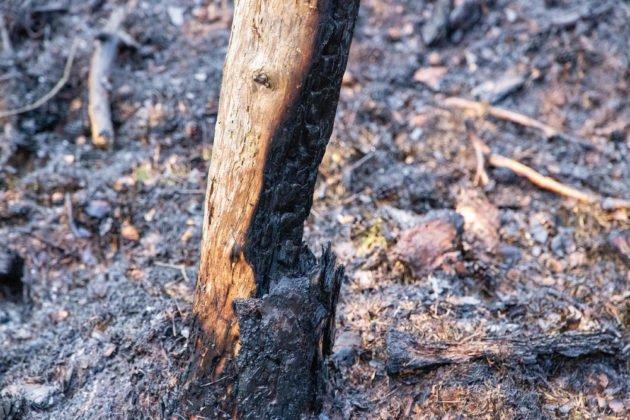 Feuer Wald 018 1