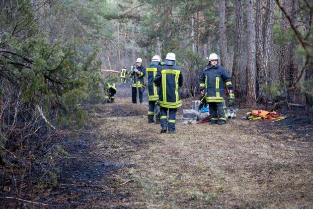 Feuer Wald 019