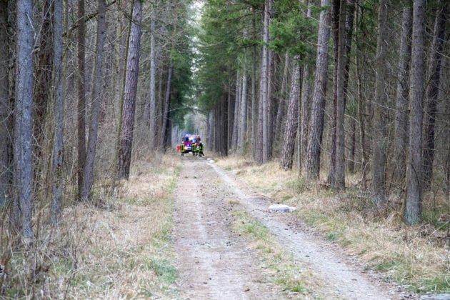 Feuer Wald 021