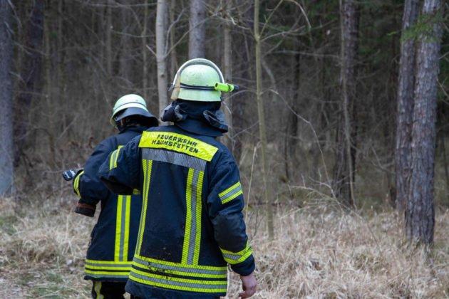 Feuer Wald 022
