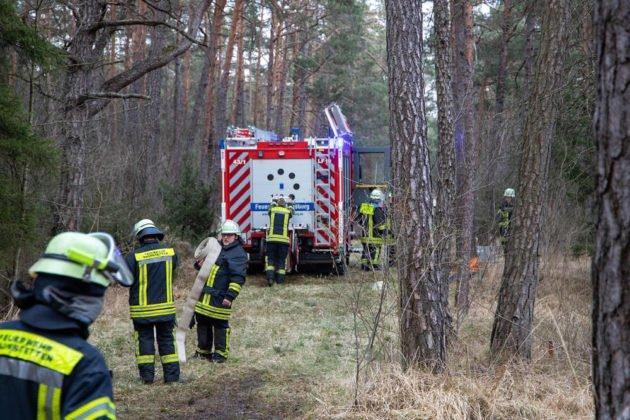 Feuer Wald 023