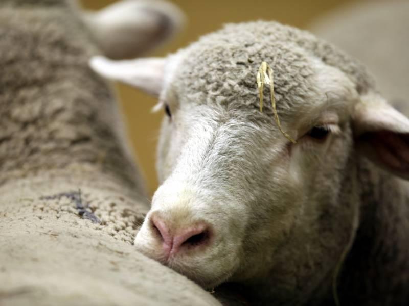 Landwirtschaftsministerin Wirbt Fuer Urlaub Auf Dem Bauernhof