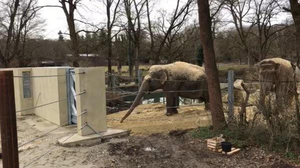 unnamed-5 Zoo Augsburg aktuell | Das Leben im Tierpark geht trotz Corona-Schließung weiter Augsburg Stadt Bildergalerien Freizeit News Newsletter Videos Zoo Augsburg Zoo Augsburg |Presse Augsburg