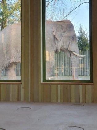 unnamed-6-315x420 Zoo Augsburg aktuell | Das Leben im Tierpark geht trotz Corona-Schließung weiter Augsburg Stadt Bildergalerien Freizeit News Newsletter Videos Zoo Augsburg Zoo Augsburg |Presse Augsburg