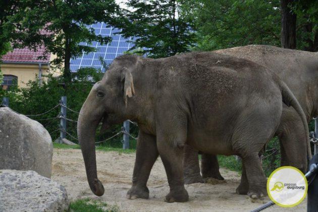 2020 05 11 Elefanten 12 Von 42.Jpeg