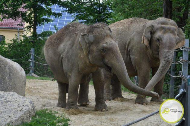 2020 05 11 Elefanten 13 Von 42.Jpeg