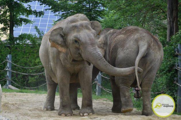 2020 05 11 Elefanten 14 Von 42.Jpeg