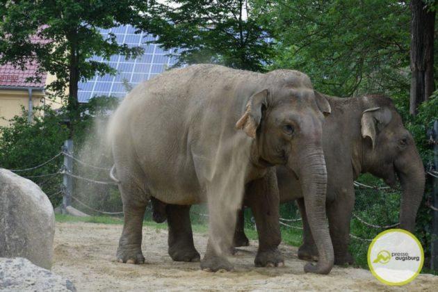 2020 05 11 Elefanten 15 Von 42.Jpeg