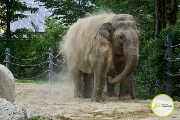 2020 05 11 Elefanten 16 Von 42.Jpeg