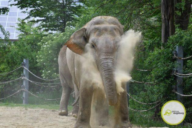 2020 05 11 Elefanten 17 Von 42.Jpeg