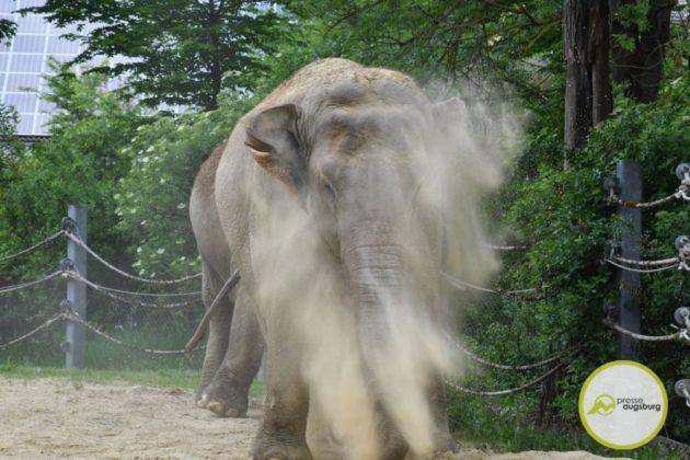 2020 05 11 Elefanten 18 Von 42.Jpeg