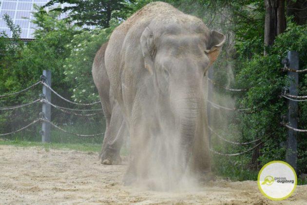 2020 05 11 Elefanten 19 Von 42.Jpeg